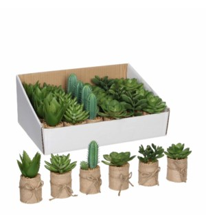 Succulent in pot green 6 assorted pdq - h12xd5cm