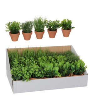 Herb in pot green 5 assorted pdq  - h18xd7cm