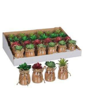 Succulent in pot green 4 assorted display - h11xd5,5cm