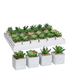 Succulent in pot green 4 assorted display 24 pieces -h8xd5cm