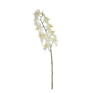 "Phalaenopsis white - 28"""