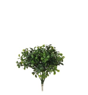 Boxwood pick green - 7""