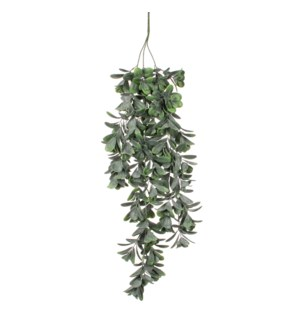 Crassula hanging green - 31.25""