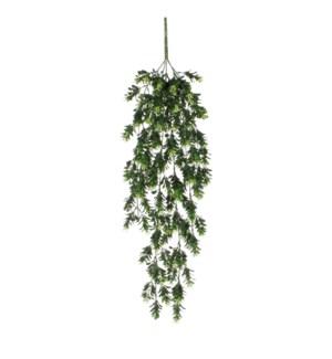 """Schefflera hanging green - 29.5"""""""