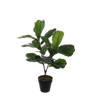 Ficus Lyrata in plastic pot green - 23.75x29.5""