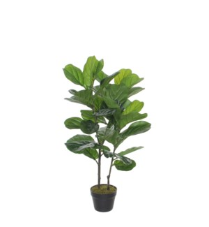 Ficus Lyrata in plastic pot green - 23.75x39.5""