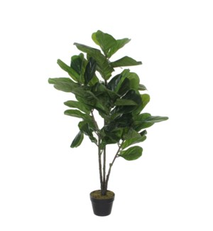 Ficus Lyrata in plastic pot green - 23.75x47.25""