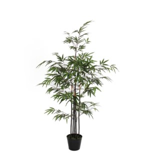 Bamboo green in plastic pot - 29.5x47.25""