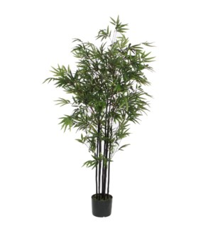Bamboo green in plastic pot - 37.5x59""