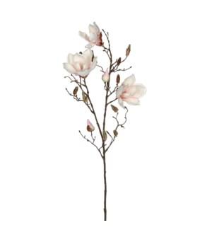 """Magnolia l. pink  - 34.75"""""""