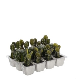 Cactus in pot green 3 assorted  - 5.5""