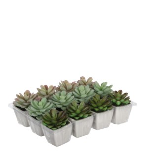 Cactus in pot green 3 assorted  - 3.25""