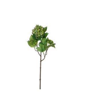 """Viburnum d. green  - 18"""""""