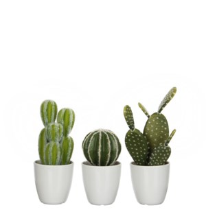 Cactus in plastic pot green 3 assorted  - 3.75x11""