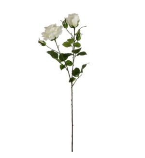"""Rose cream  - 33.5"""""""