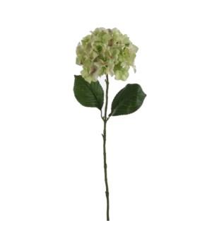 "Hydrangea green  - 30.25"""
