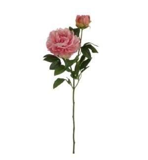 "Peony d. pink - 24.5"""