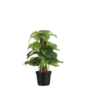 "Pothos in plastic pot green - 8x11.75"""