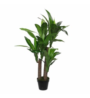 Dracaena in pot green - h110xd60cm