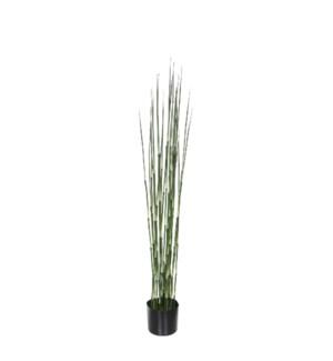 Bamboo in plastic pot green - h120xd15cm
