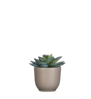 "Succulent grey in pot tusca d. green 3.25"" - 4x4.25"""