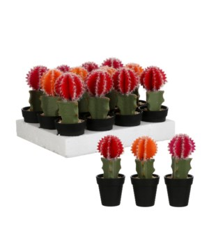 Cactus in plastic pot red orange d. pink 3 assorted - 3.25x8""