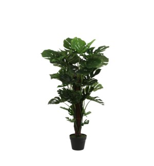 Monstera in plastic pot green - 23.75x41.25""