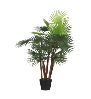 Fan palm in pot green - 23.75x35.5""