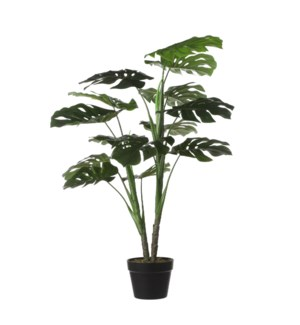 Monstera in pot green - 27.5x39.5""