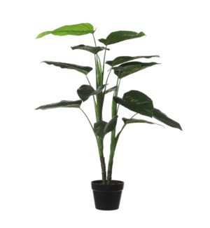 Philodendron in pot green - 27.5x39.5""