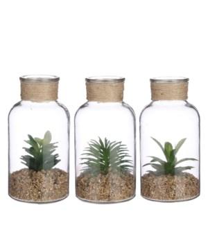 "Succulent green 3 assorted - 4x8"""