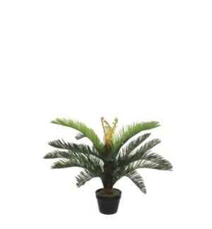 "Cycas palm in plastic pot green - 31.5x29.5"""