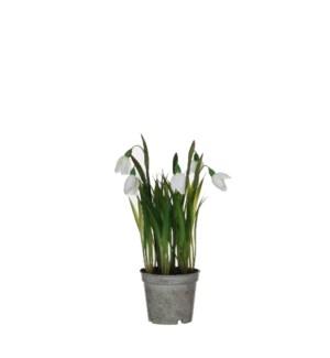 """Snowdrop in plastic pot white - 3.25x9.5"""""""
