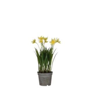 "Daffodil in plastic pot yellow - 3.25x10.25"""
