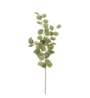 """Eucalyptus green - 36.25"""""""