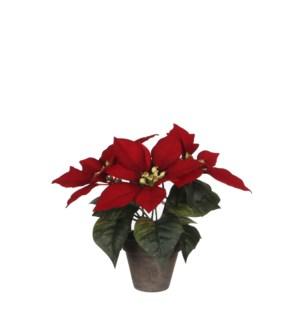 "Poinsettia red in pot Stan grey d9cm - 9.75"""