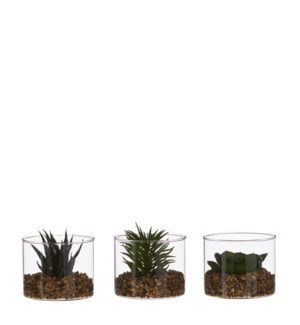 "Succulent green 3 assorted - 4x3.25"""