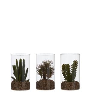 "Succulent green 3 assorted - 4x7"""