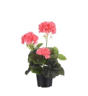 """Geranium in plastic pot peach - 8x12.5"""""""