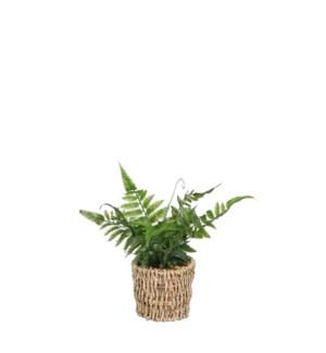 """Fern in basket green - 4x10.25"""""""