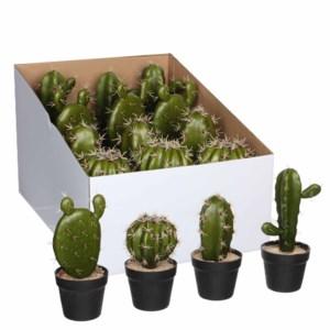 Plants displays