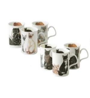Cats Galore Lancaster Mug Set