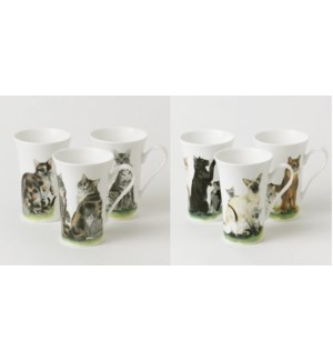 Cats Collection Emily Mug Set