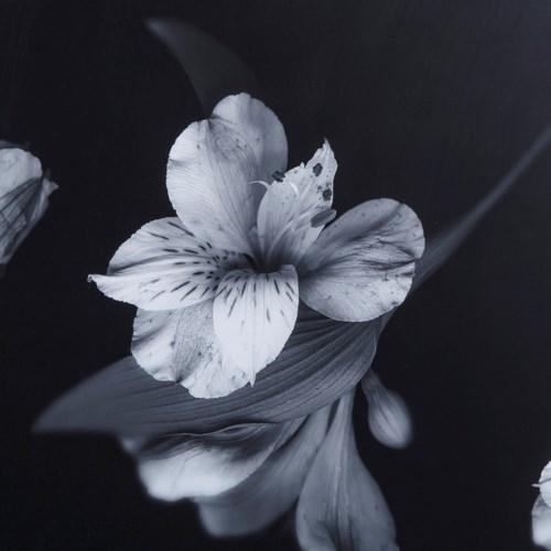 Black white flowers glass float stl newmanbedroom fw18 black white flowers glass float mightylinksfo