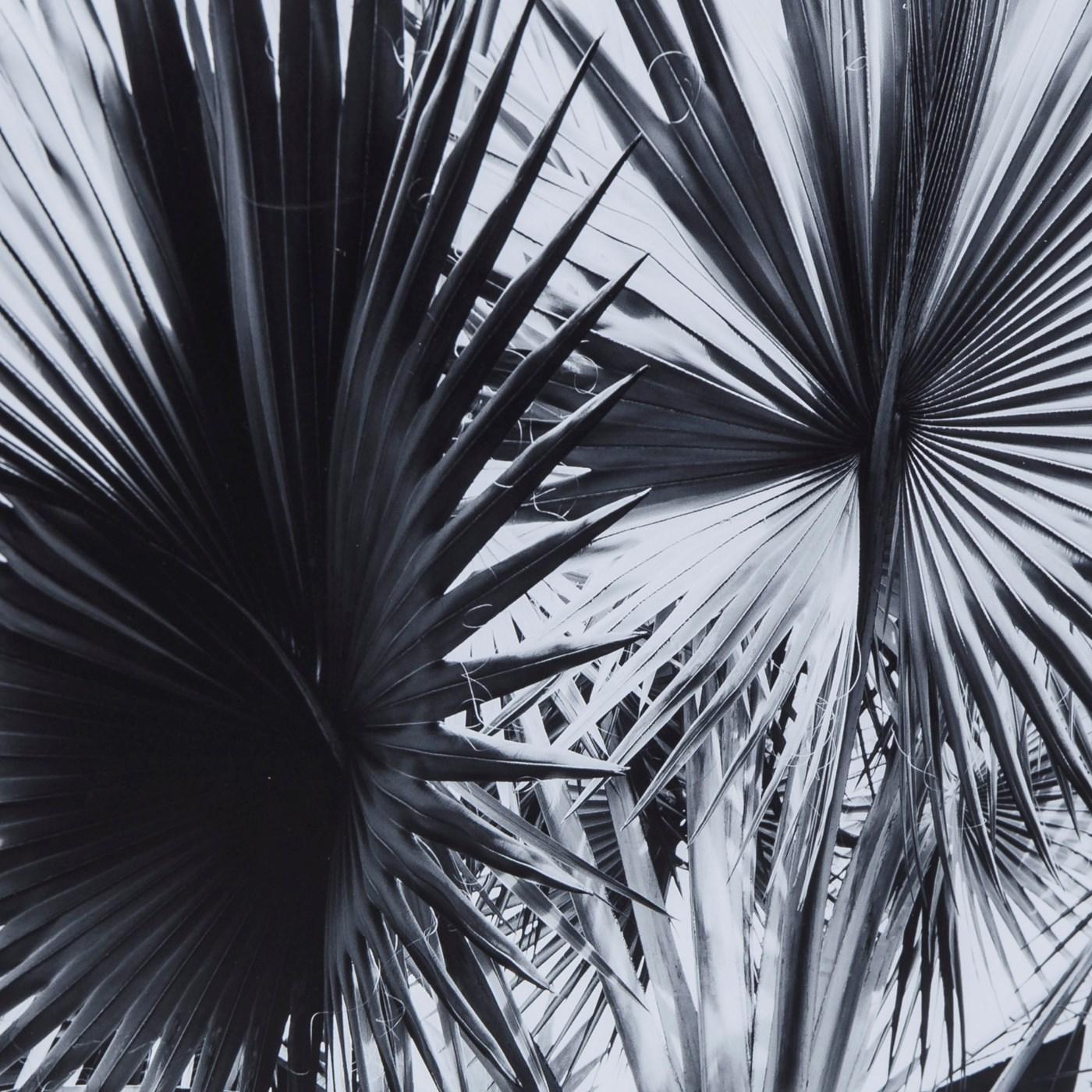 Black & White Palm Leaves - A