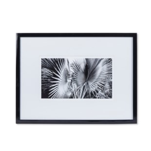 Black & White Palm Leaves - C