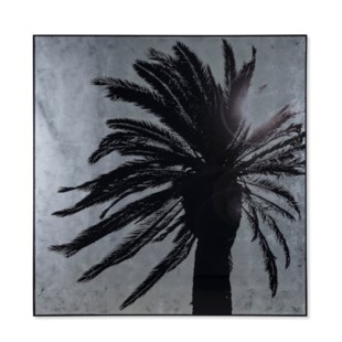 Silver Leaf Palm Tree - B