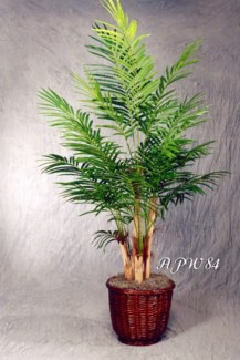 7 FT. ARECA PALM