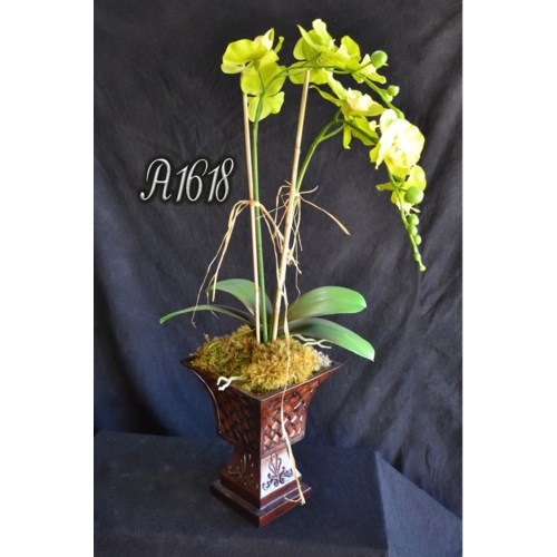 GREEN PHAELANOPSIS ORCHID ARRANGEMENT