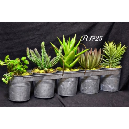 SET OF 5 CACTUS IN GALVANIZED PAIL